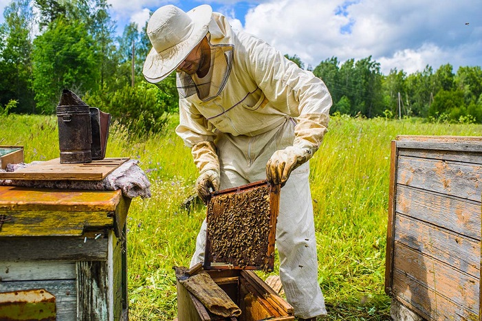 Facts about beekeeping