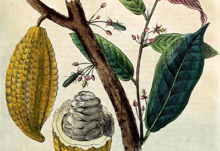 Cacao, Chocolate as Nature Intended