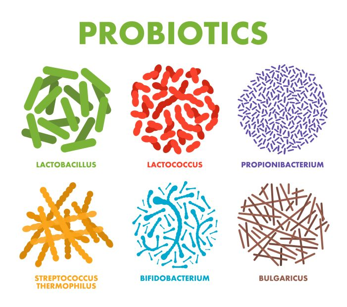 Healthy types of probiotics